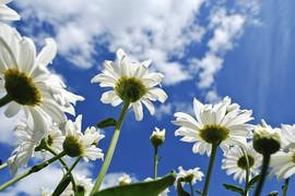 Blumen, Praxis für Hypnotherapie und Coaching Nidda